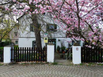 Bad Dürrenberg - Naturdenkmal Ginkgobaum in der Fährstraße