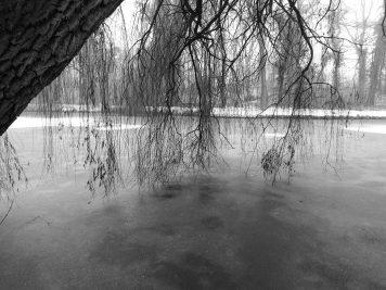 Baum am zugefrorenen Buschteich