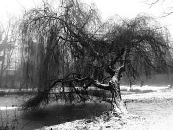 Ein Baum an Hubertusteich