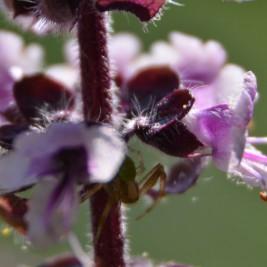 Zwischenring Makro: Blüte