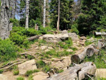 Harzer Hexenstieg (Teil 2) - Auf dem Weg zum Brocken