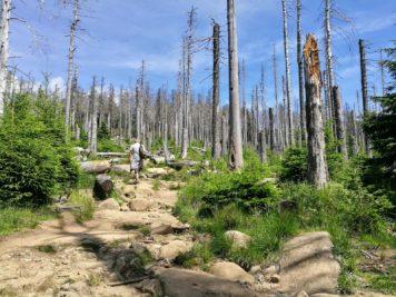 Harzer Hexenstieg (Teil 3) - Auf dem Weg zum Brocken