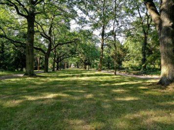 Allee im Friedhof 3 der Stadt Dessau