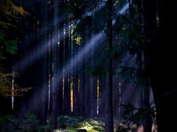 Mystischer dichter Nadelwald bei Friedrichsbrunn