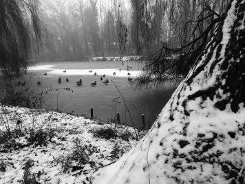 Enten laufen über den zugefrorenen Hubertusteich