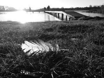 Feder am See in Lübbenow, Uckermark (Huawei P9 schwarz-weiß, ISO 50)
