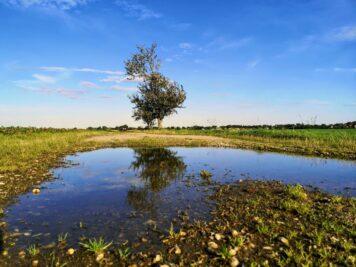 Feldweg nach Gollma, Baum spiegelt sich in Pfütze