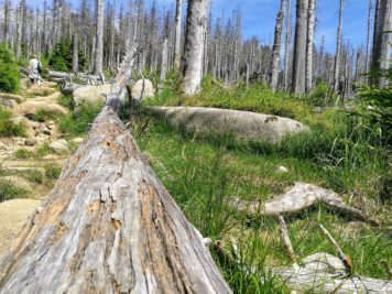 Über Stock und Stein hinauf zum Brocken im Harz