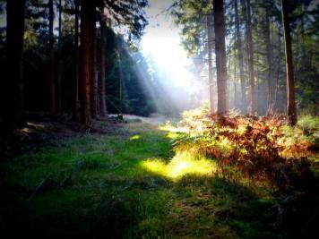 Sonnenschein an einem Herbsttag im Wald