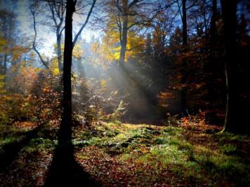 Herbstwald bei Friedrichsbrunn an der Südwestflanke der Viktorshöhe