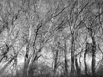 Kahle Bäume in der Uckermark (Huawei P9 schwarz-weiß, ISO 50)