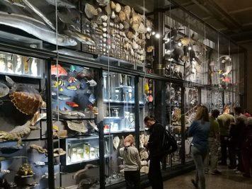 Biodiversitätswand, Evolution in Aktion im Museum für Naturkunde Berlin