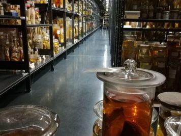 Forschungs-Nass-Sammlung im Museum für Naturkunde Berlin