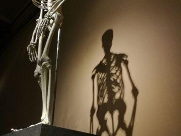 Menschliches Skelett im Naturkundemuseum Berlin