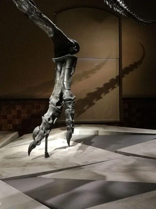 Fuß und Schwanz vom T-Rex Tristan, Naturkundemuseum Berlin