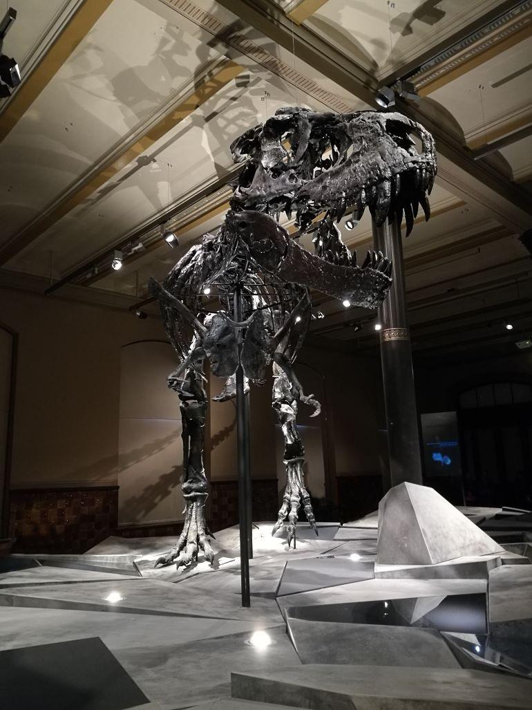 Reinigung berlin naturkundemuseum