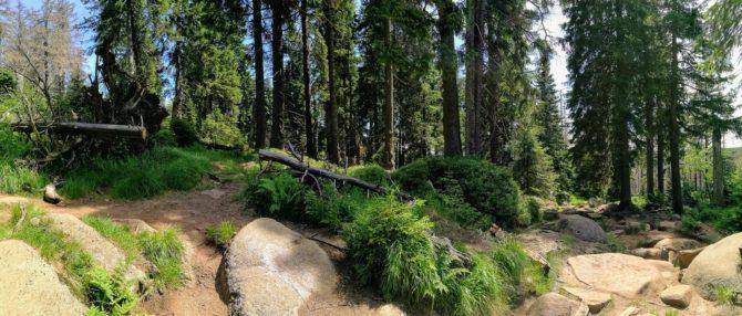 Panorama-Foto: Brockenweg - Harzer Hexenstieg