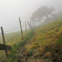 Panoramaweg Piesendorf: Ein Weidezaun im Nebel