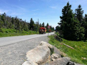 Pferdegespanne am Ende des Hexenstiegs auf der Brockenstraße