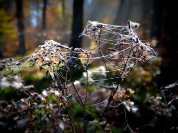 Spinnenweben im Herbstwald