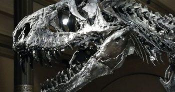 T-Rex im Naturkundemuseum Berlin