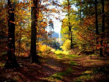 Waldweg nahe der Teufelsmühle