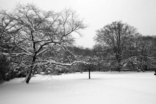 Botanischer Garten Gütersloh Schnee