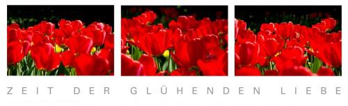 rote Tulpen im Sonnenschein