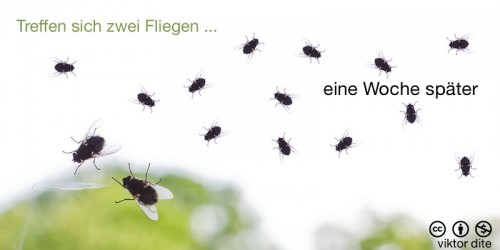 fotozhaba-treffen-sich-zwei-fliegen-eine-woche-spaeter