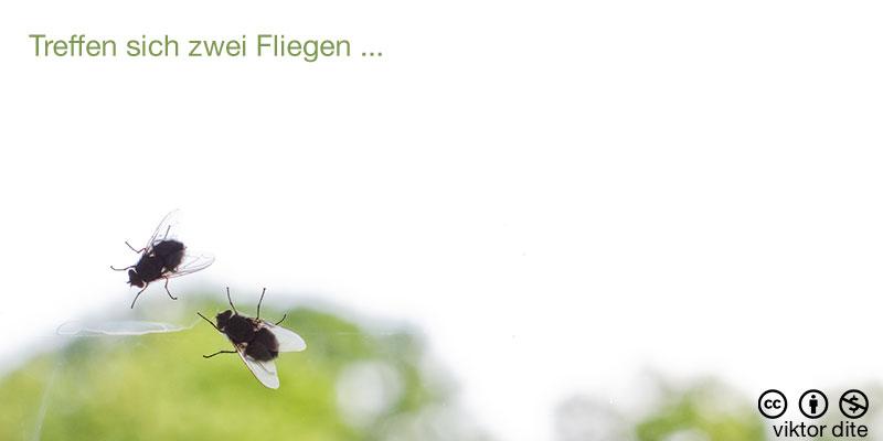 fotozhaba-treffen-sich-zwei-fliegen
